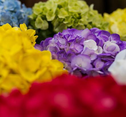 Montecarlo-gardens-quality-flowers