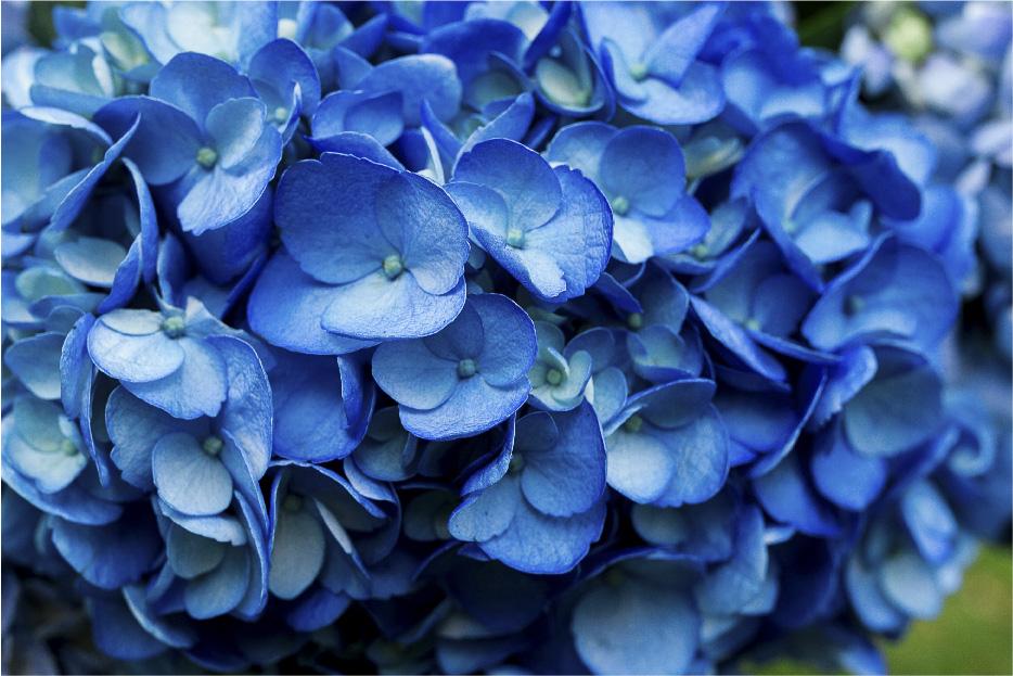 Tinted Shocking Blue