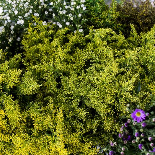 Montecarlo-gardens-colombia-rionegro-aster